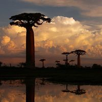 16 Cool Pictures of Baobab Trees