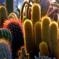 18 Sharp Desert Plant Pictures