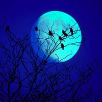 26 Enchanting Pictures of a Full Moon