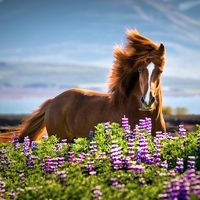 Spectacular Images of Horses by Tina Thuell