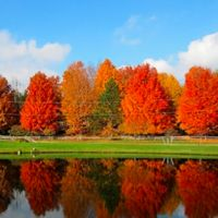 17 Lovely Pictures of Maple Trees