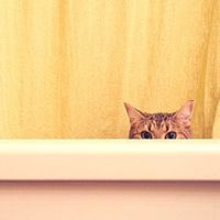 18 Cute Pictures of Peeking Cats