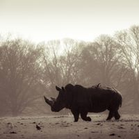 16 Remarkable Images of Rhinos