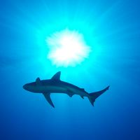 19 Cool Shark Pictures