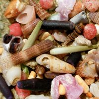 17 Beautiful Pictures of Seashells