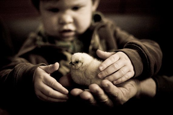 fuzzy chick and baby