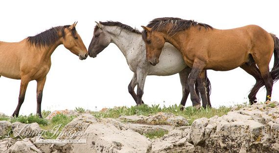 Wild Horse Greeting