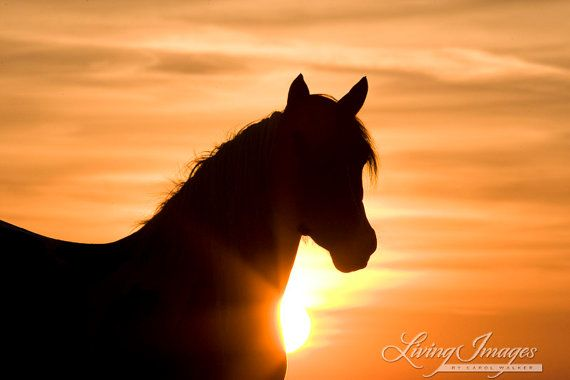 Wild Stallion at Sunrise
