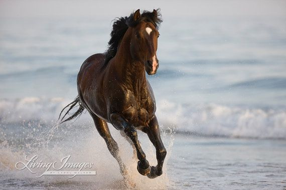Stallion in the Surf