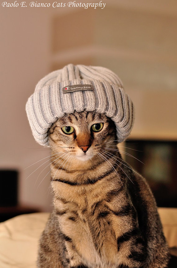 19 adorable pictures of cats in hats