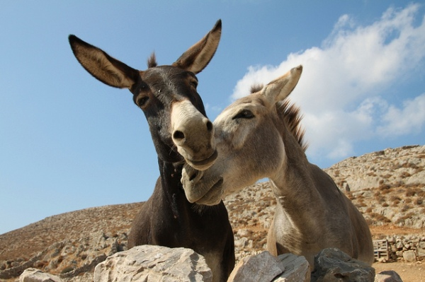 Donkeys in Love by Klearchos Kapoutsis