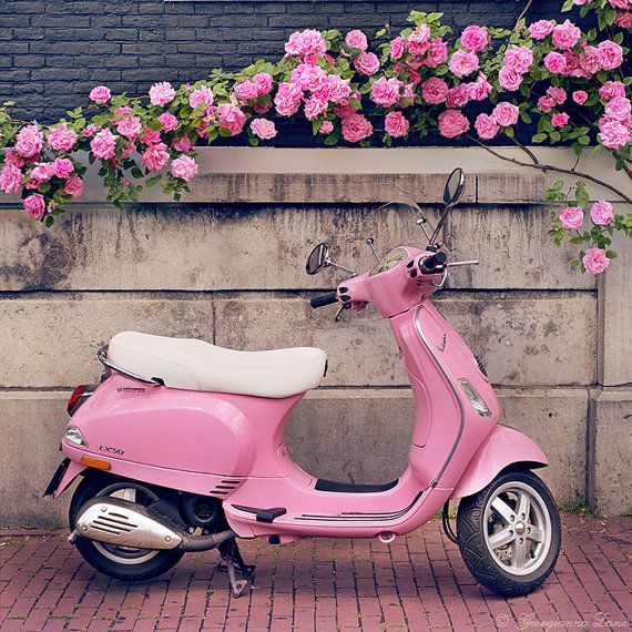 Pink Scooter and Roses