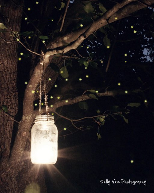 17 Enchanting Pictures Of Fireflies