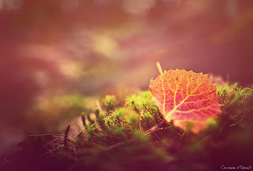 Small bits of foliage can create an autumn image without being in full peak color.