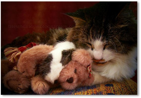 Cat teddy bear