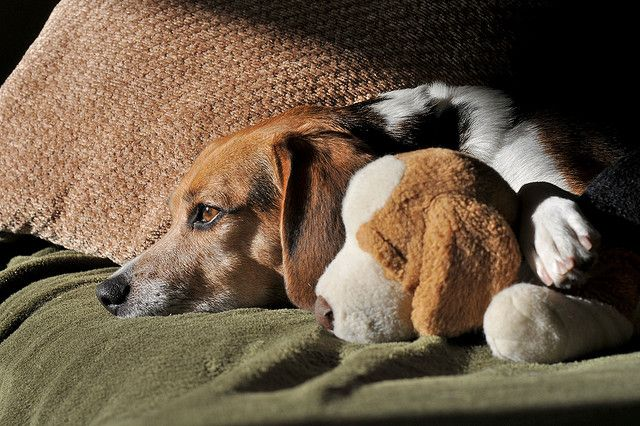 dog with stuffed animal
