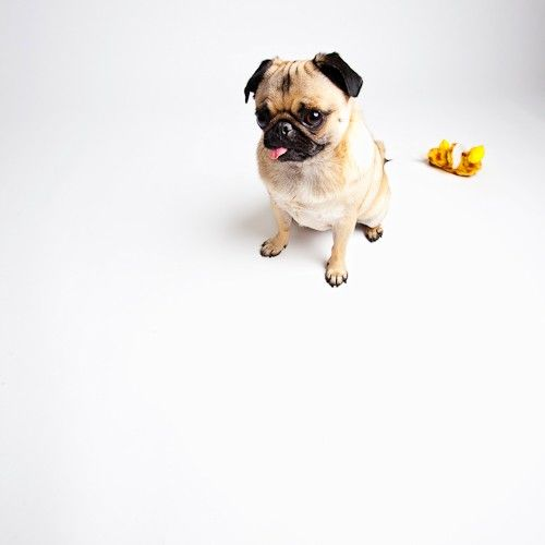 dog with stuffed toy