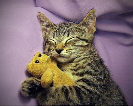 cat with teddy bear