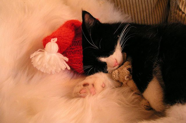 cat christmas teddy bear