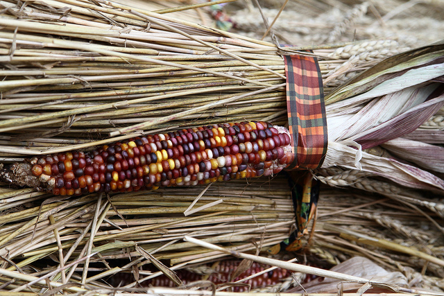 Indian Corn by Jim, the Photographer