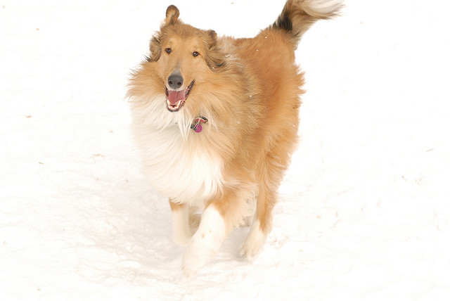 Dog Prancing in the snow