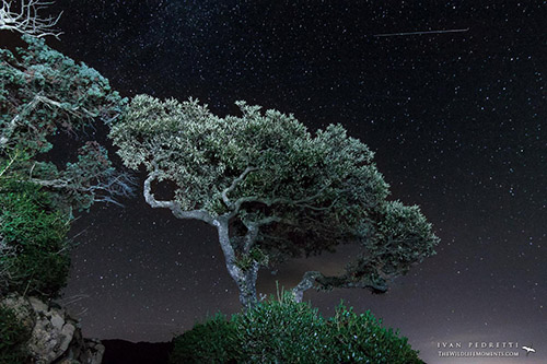 Stars and tree in Italy