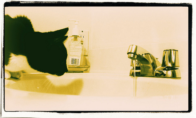 cat drinking from water faucet