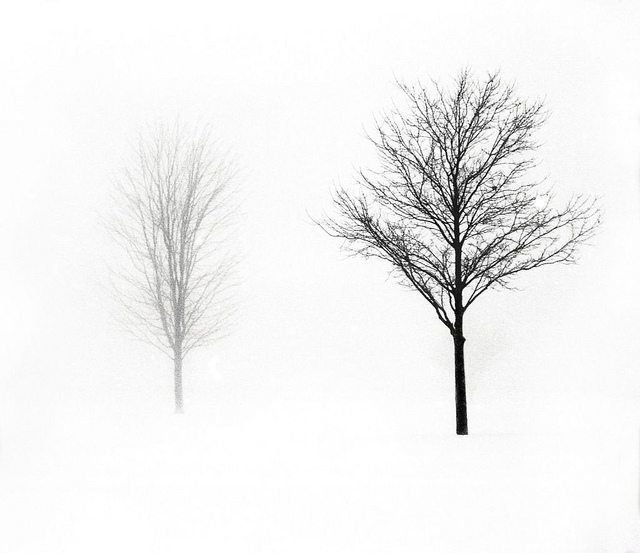 16 Striking Pictures of Bare Trees