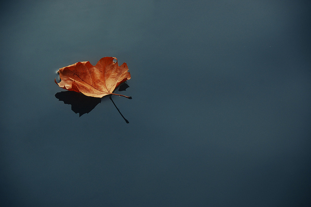 Autumn leaf on still water
