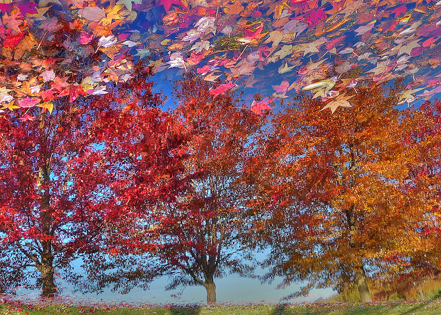 Floating leaves and tree reflection in the water