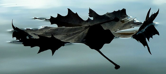 Floating leaf with pool of water