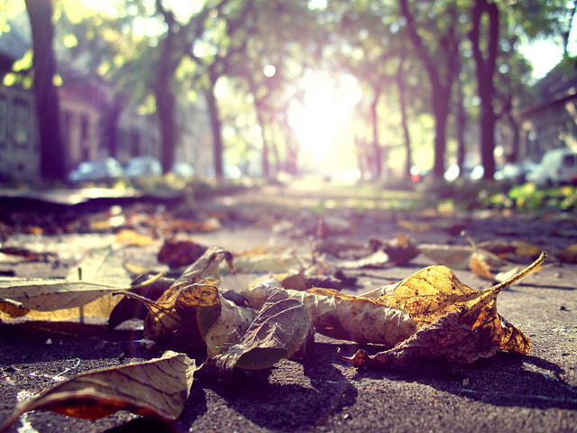 Lens Flare Leaves on the Ground