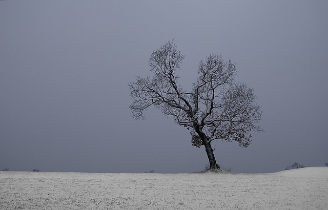 Minimal Winter Tree