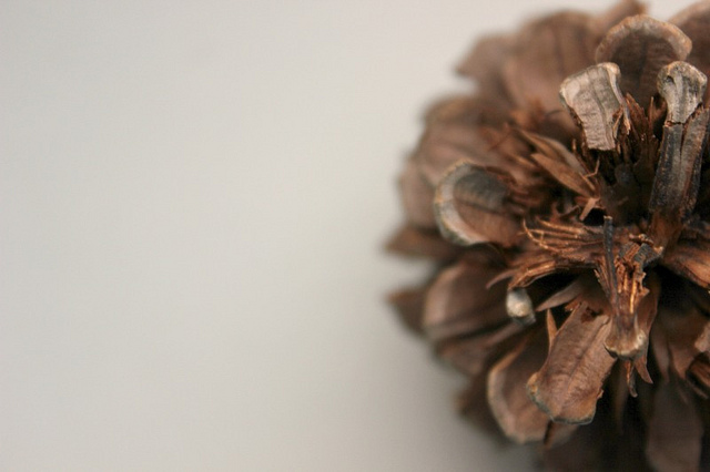 i is for intricate pine cone