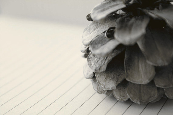 Pinecone and Paper