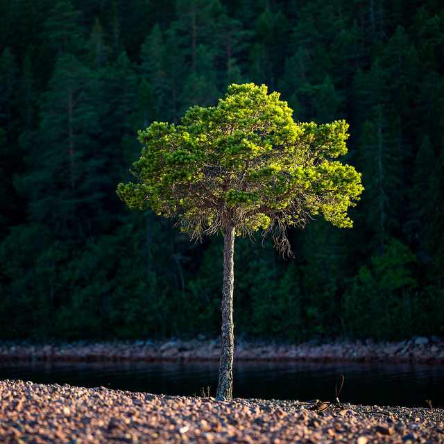 Ulf Bodin Sweden Lonely Tree