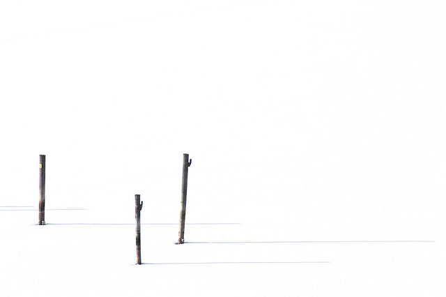 Minimal Winter Twigs