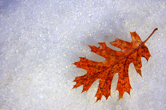 Minimal Winter Leaf