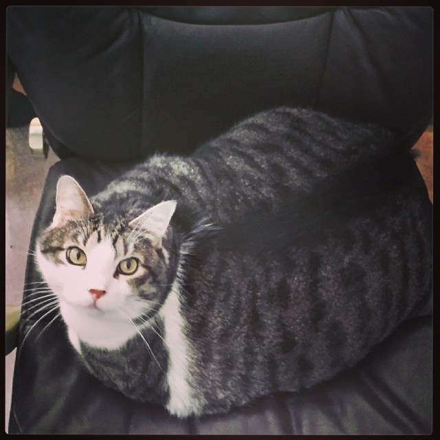 Fat cat stole my chair!
