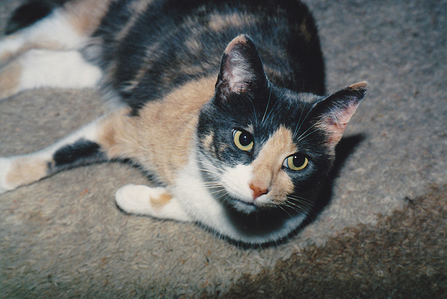 Daisy, July 1988