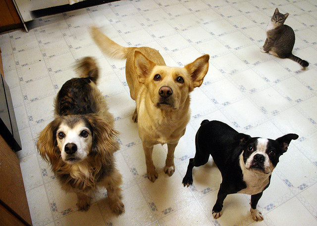 dogs begging for food