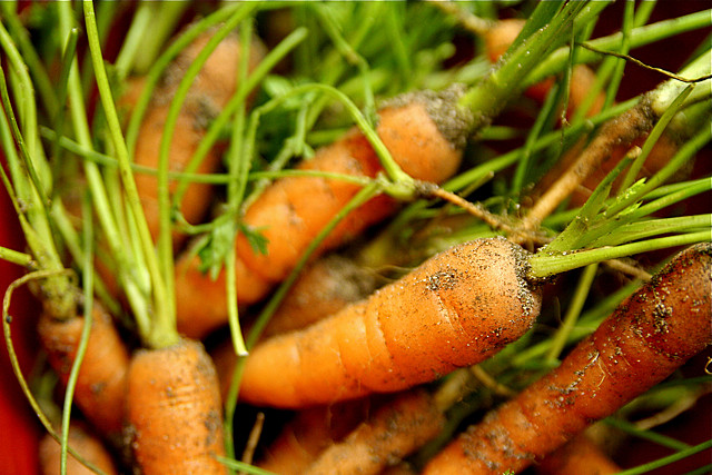Baby Organic Carrots by Steven Depolo