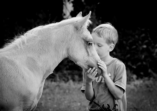 kids friends baby horse foal