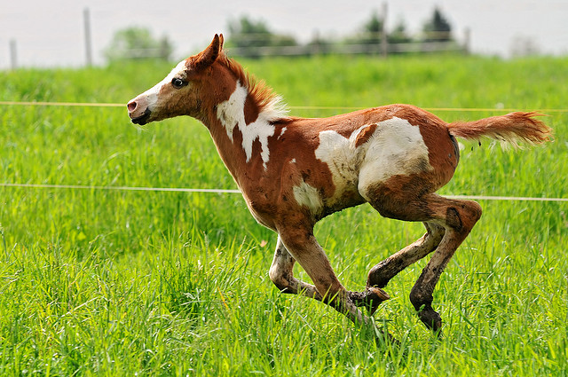 baby horse foal Wind of freedom