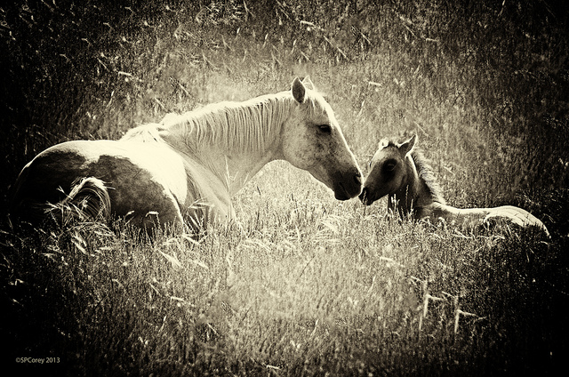 Mother and Child Union baby horse foal