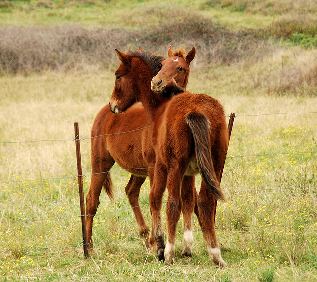 Friendly foals baby horse