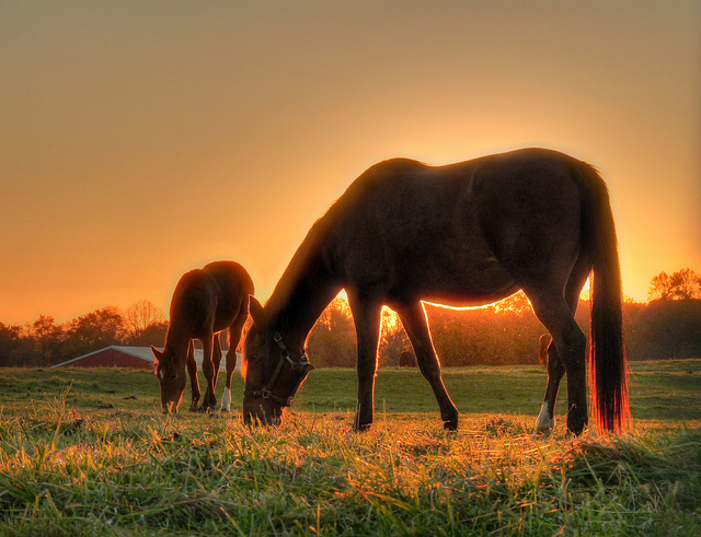 baby horse foal Mother & Son - Colts Neck NJ