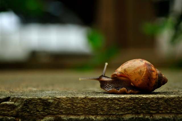 Looking back, another year gone by snail