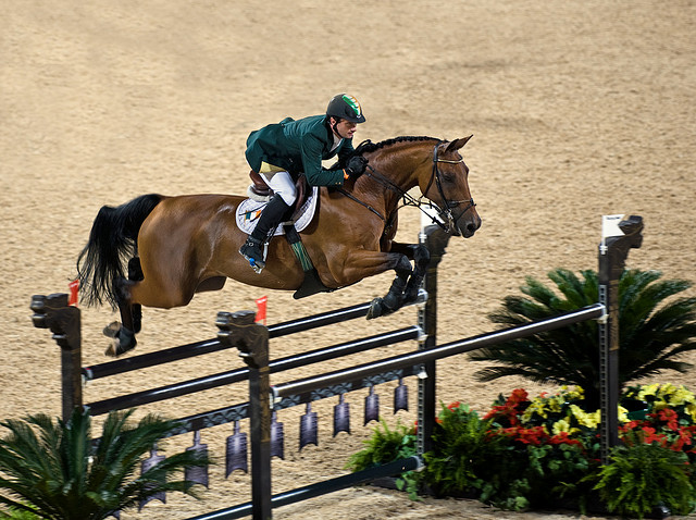 athlete horse Clearing the gate