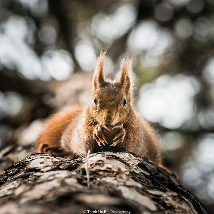 a squirrel's life
